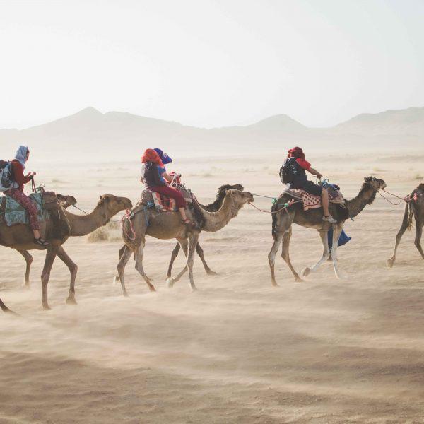 guía turístico a camello guiando un grupo