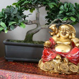 Bonsai al lado de figura de Buddha