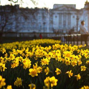 Jardín con flores amarillas