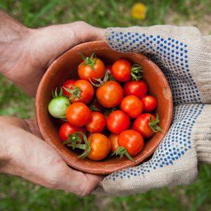 Manos sujetando cuenco con frutos
